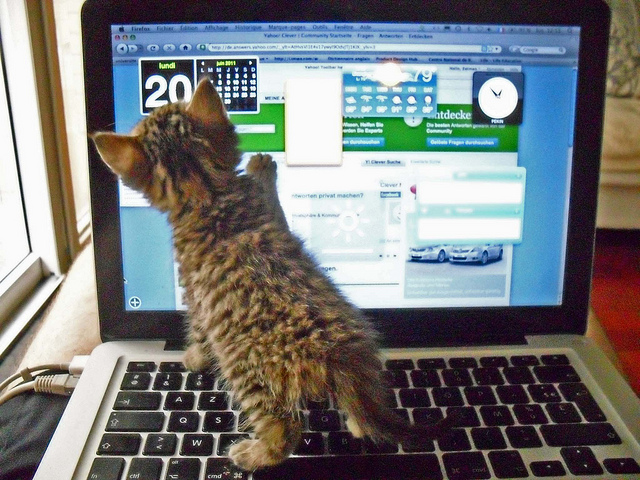 brown striped kitten on laptop keyboard pawing at the screen, green, blue and white background, table & windows